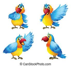 Four colorful parrots