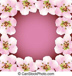 Frame with blossoming sakura - japanese cherry tree