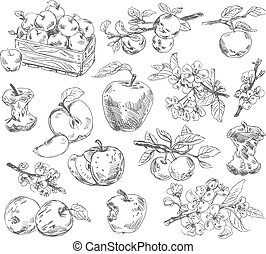 Freehand drawing apples. Vector illustration. Isolated on white background