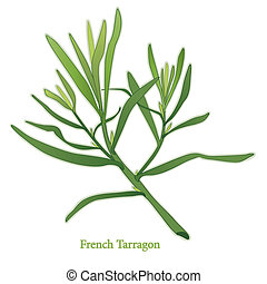 French Tarragon, aromatic perennial herb, lance shaped leaves used in cooking, salads, dressings, herb vinegars. Classic ingredient of French herb blend, Fines Herbes. See other herbs and spices in this series.