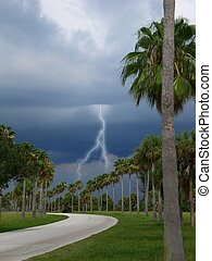 gathering storm clouds hovering over palm trees with one lightning bolt