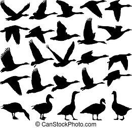 Geese black silhouette