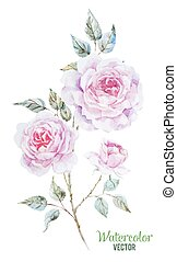 Beautiful vector image with gentle watercolor roses