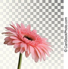 Gerbera isolated on a transparent background