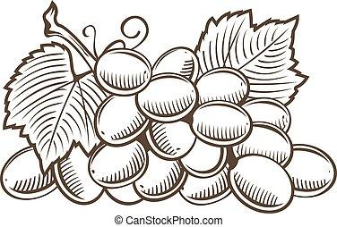 Grapes in vintage style. Line art vector illustration