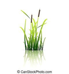 Grass green reed