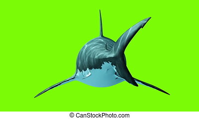 Great White Shark on a green background
