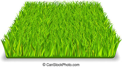 Green grass square realistic isolated vector illustration