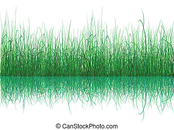 Green grass with reflection isolated on white