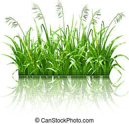 Green grass, vector
