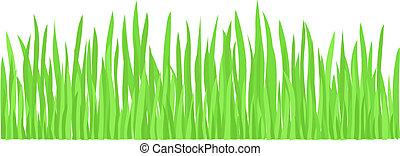 Young Fresh Green Grass