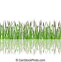 Green grass with reeds and reflection is a seamless illustration. Vector illustration in the cartoon style.
