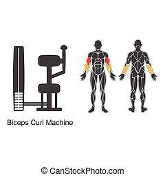 Gym biceps curl machine
