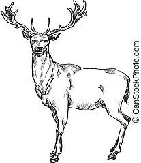 hand drawn deer