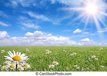 Green Grass, Blue Sky, and Daisy Landscape