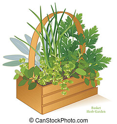 Wood basket garden planter with cooking herbs, left to right: Italian Oregano, Sage, Chives, Flat Leaf Parsley, Sweet Marjoram. EPS8 compatible. EPS8 compatible. See other herbs and spices in this series.