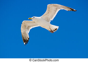 Seagull hovers high above the ocean
