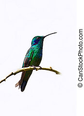 A blue and green hummingbird sits on a perch.