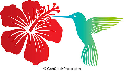 hummingbird and red hibiscus flower
