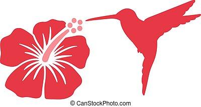Hummingbird with hibiscus flower