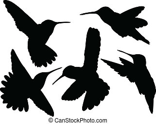 illustration of humming bird silhouette collection - vector
