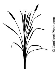 illustration of the reed on white background