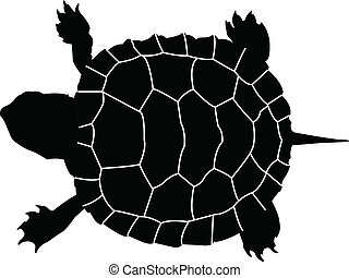 illustration of turtle - vector