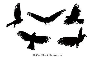 Imafe flying eagle.