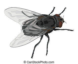 Insect fly isolated on white background. Vector illustration.