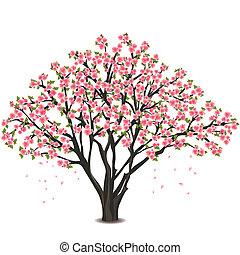 Japanese cherry tree blossom over white