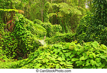 Jungle, Hawaii Volcanoes National Park, Big Island, Hawaii, USA