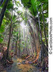 Valee-de-Mai rain forest park on Praslin island, Seychelles. HDR image