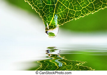 Leaf with water droplet over still water reflection