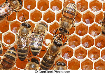 Bees transfer one other nectar or medical