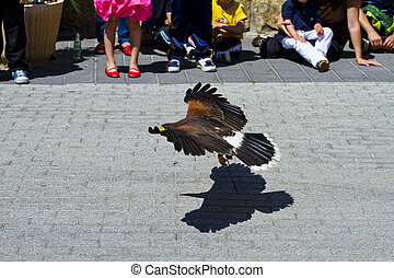 low-flying eagle