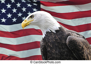 Bald Eagle looking sideways in front of USA flag