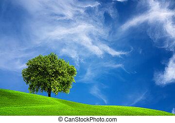Oak tree in nature