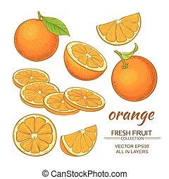 orange fruiit vector set on white background