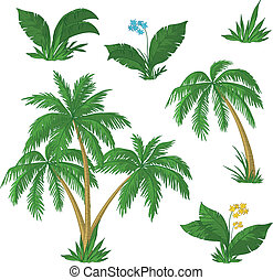 Palm trees, flowers and green grass on white background. Vector
