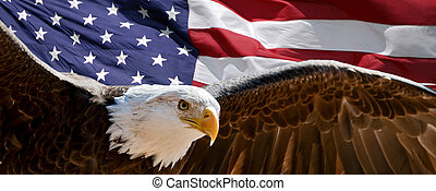 A bald eagle taking wing in front of a U.S. flag