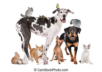 Group of Dogs, cats, birds, mammals and reptiles in front of a white background