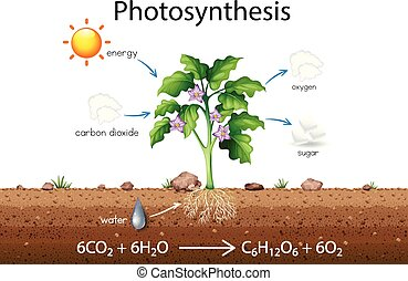 Photosynthesis explanation science diagram illustration