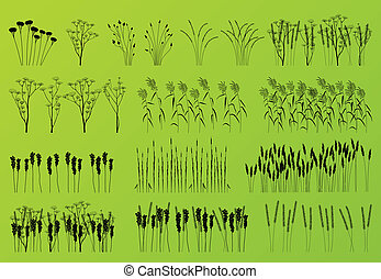 Plants, grass and flowers detailed silhouettes illustration collection background vector