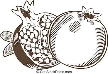 Pomegranates in vintage style. Line art vector illustration