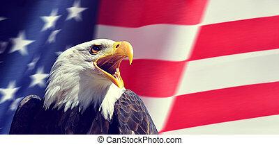 Portrait of a North American Bald Eagle (Haliaeetus leucocephalus) in the background USA flag.