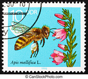 GDR - CIRCA 1990: a stamp printed in GDR shows Blooming Heather, Bees Collecting Nectar, circa 1990