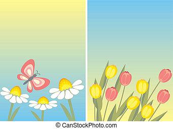 chamomile and tulip