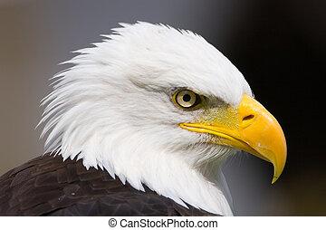 Proud Eagle