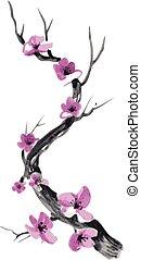 Realistic sakura blossom isolated on white background.