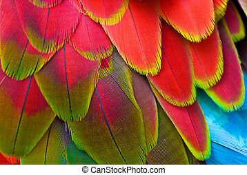 Brilliant Red and blue back and wing feathers seen close up at Jungle Gardens, Sarasota ,Florida